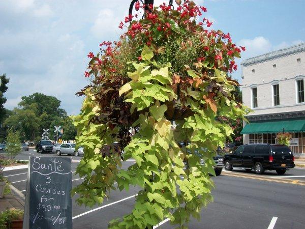 Green-vegetables-mixed-hanging-basket Garden hanging basket decorating ideas