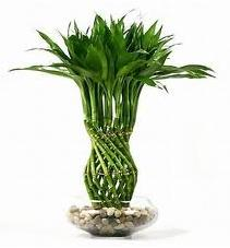 Inspired By Nature as well Awesome Indoor Plant Decoration Ideas Introduce Tantalizing Wooden Table With  fortable Single Chair Also Prepossessing Transparent Glass Window Interior Design besides Home Organizing Tips Having Plants Indoors 790 also Artificial Plants in addition 17664466. on living room artificial houseplants
